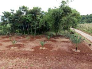 Kavling Kebun Kurma di Kampung Kurma Jonggol