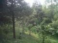 Tanah Dijual di Kawasan Puncak 3, Cipanas, Sukaresmi, Cianjur.