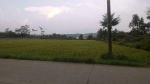 Jual Tanah di leuwiliang Bogor