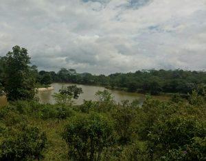 Kebun Kurma di kampung Kurma Jonggol Grup Hanya 40 juta