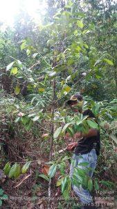 Jual Murah Tanah Di Bogor Kebun Buah Pinggir Jalan 30rb