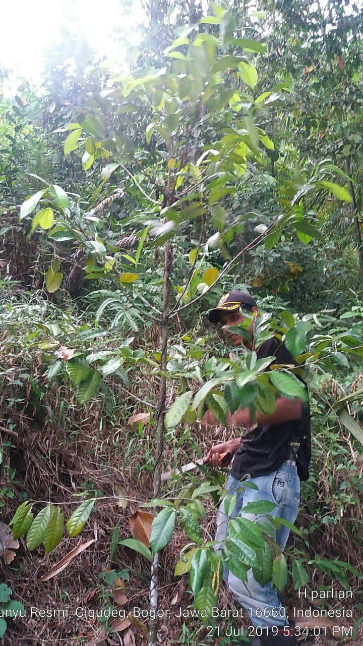 Jual Murah tanah di Bogor