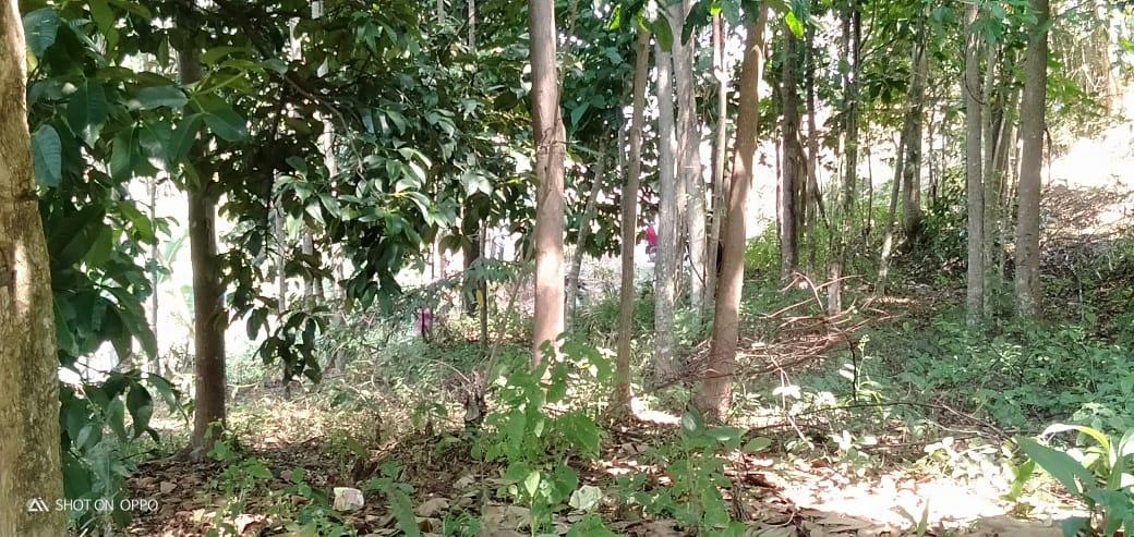 Jual Tanah Bogor Murah Pinggir Jalan