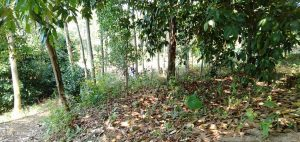 Jual Tanah Murah di Bogor Pinggir Jalan Aspal Kaki Bukit